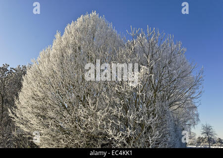 Vluyn stock photos vluyn stock images alamy for Goldfische teich winter