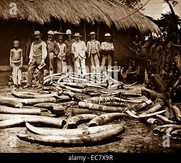 Belgian colonial period Congo. Africa became a centre for ivory hunting from elephants killed for sport;   or ivory - Stock-Bilder
