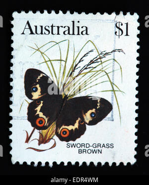 Used and postmarked Australia / Austrailian Stamp $1 Sword-Grass Brown Butterfly - Stock Image
