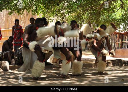 Scene of Swazi men performing high kicking war dance during a show at Matsamo Cultural village Swaziland Travel - Stock-Bilder