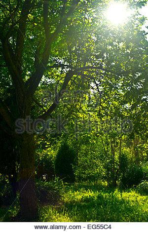 Shady Garden   Stock Image