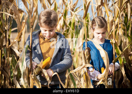 Two children in maize field - Stock Image