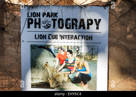 South Africa African Johannesburg Lion Park wildlife conservation woman lion cub interaction sign - Stock Image
