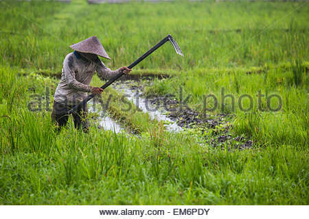 Farmer with hoe stock photos farmer with hoe stock for Gardening tools jakarta