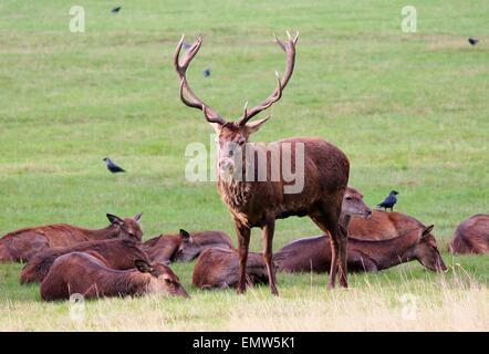 Mating Coat Stock Photos & Mating Coat Stock Images - Alamy
