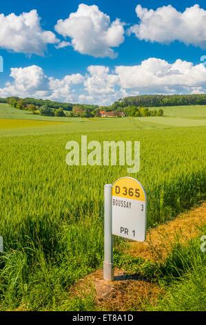 Field of ripening Corn - France. - Stock Image