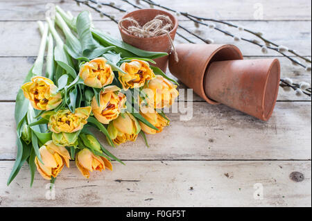 bunch of yellow double tulips on rustic wooden table with vintage terracotta pots, twine and pussy willow in the - Stock Image