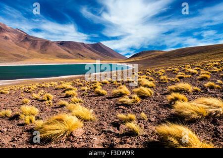 The Meniquez Lagoon in the Atacama Desert, Chile, 2013 - Stock-Bilder