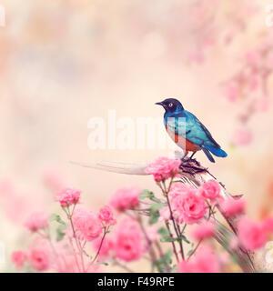 Superb Starling Perches in the Rose Garden - Stock-Bilder