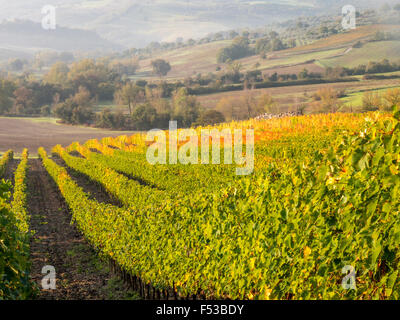 Europe, Italy, Tuscany.  Autumn vineyards in bright colors. - Stock-Bilder