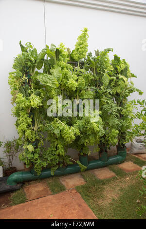 Sustainable Agriculture Stock Photos Sustainable
