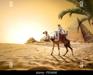 Camel near pyramids in hot desert of Egypt - Stock Image
