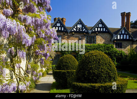 Topiary and wisteria in the Courtyard in May at Baddesley Clinton, Warwickshire. - Stock-Bilder