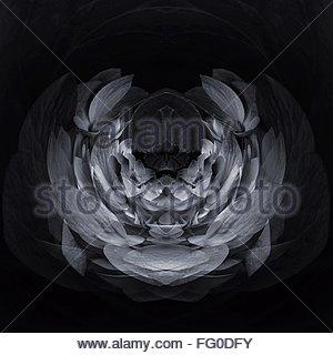 Digital Composite Image Of Hydrangea - Stock-Bilder