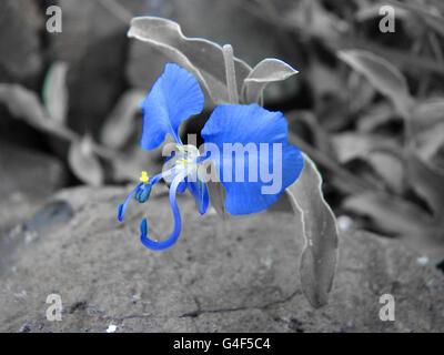 Blue Flower - Stock Image