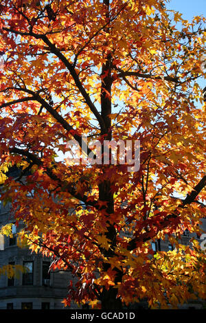 Vibrant tree foliage illuminated by afternoon sunlight. - Stock Image