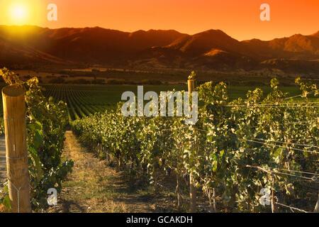 Colchagua valley stock photos colchagua valley stock for Santa cruz chile