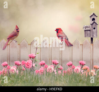 Northern Cardinal Male and Female Perching on the fence - Stock Image