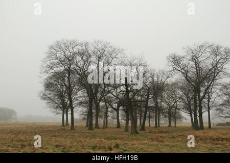 London, UK. 30th Dec, 2016. Trees on Wanstead Park seen through the morning fog on December 30, 2016. Freezing temperatures - Stock Image