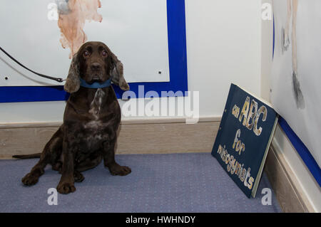 A brown spaniel on a lead appears to react to a book about misogyny called an abc for misogynists at an art exhibition - Stock Image