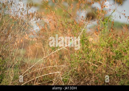 Birds of Uganda - Stock Image