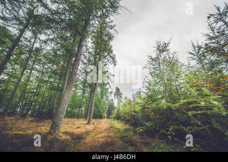 Autumn season in a Scandinavian forest with colorful trees - Stock Image