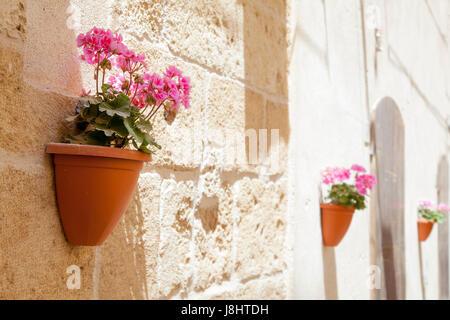Steer scenes in the town of Alghero, Sardinia - Stock Image