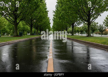 Wet Tree Lined Road in Spring on a rainy day - Stock Image