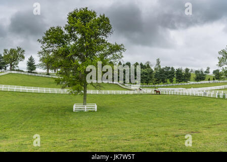Protected Tree in Horse Paddock on overcast day - Stock Image