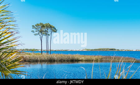 Longleaf pine trees, pristine white sand dunes line Western Lake, a coastal dune lake in the panhandle of Florida - Stock Image