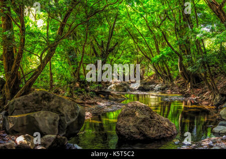 Amazon river painting stock photos amazon river painting for Forest scene drawing