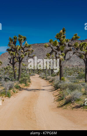 Clear Blue Sky Over Joshua Tree Field  and Mountain - Stock Image