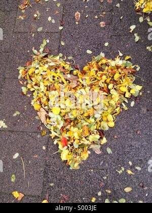 Heart made of fall leaves - Stock-Bilder