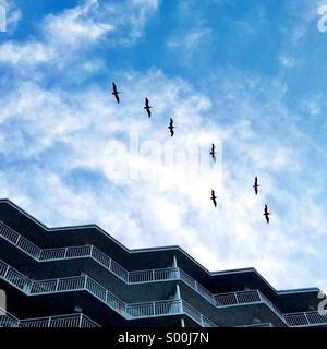 Birds flying over a condo building. - Stock-Bilder