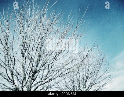 Tree branches in winter with blue sky - Stock Image