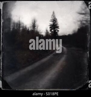 Forest path and tree - Stock Image