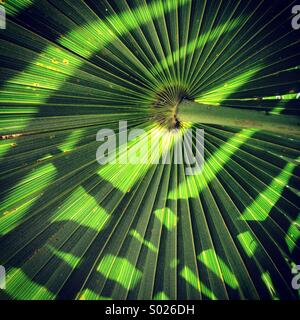 Palm leaf pattern with shadows, Yucatan Peninsula, Mexico - Stock-Bilder