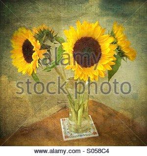 Sunflowers - Stock Image