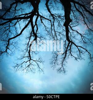 Trees against sky - Stock-Bilder
