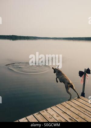 Dog jumping in lake to fetch a stick - Stock-Bilder