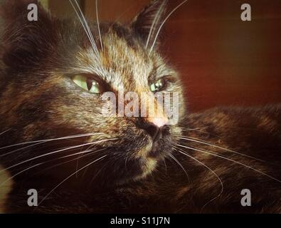 Portrait of a cat in a nostalgic style of the film - Stock Image