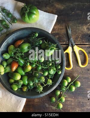 Green tomatoes - Stock-Bilder
