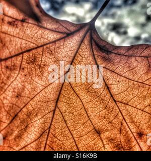 Brown leaf falling - Stock-Bilder