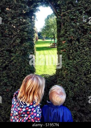 Peeking through the hedge - Stock Image