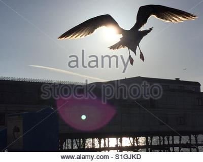 Seagull flying by The Royal Pier, Aberystwyth - Stock-Bilder