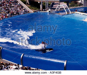 Killer whale show stock photos killer whale show stock for Pool show in orlando 2016