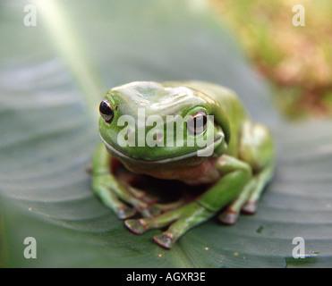 Green dating australia