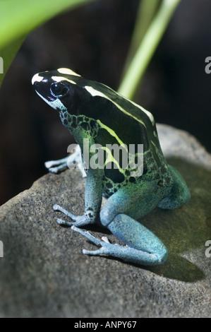skin secretions of frogs