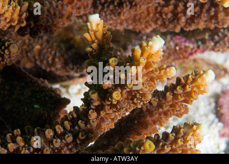 sea spider and table coral relationship counseling