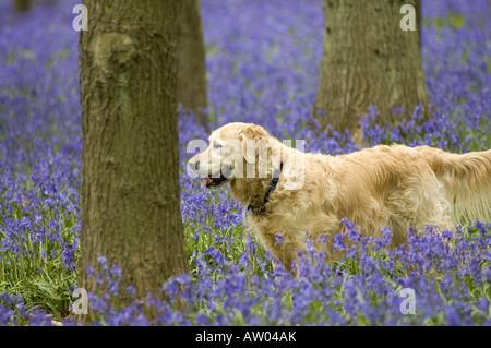 Dog Gives Woman Morning Wood